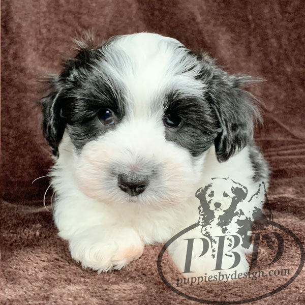 indiana puppies for sale by me